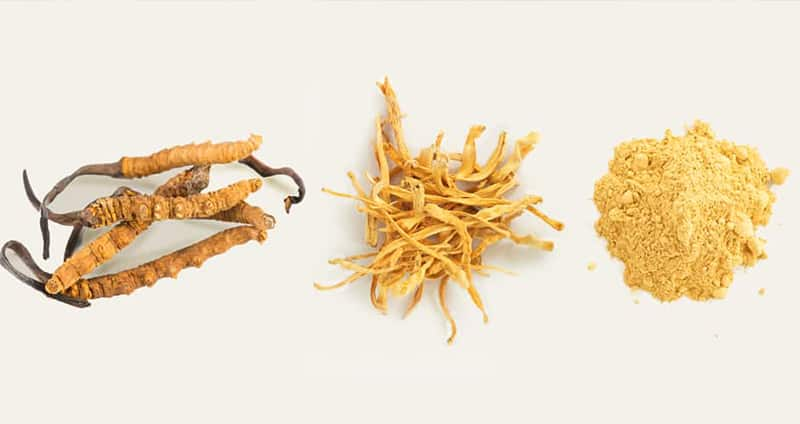 Cordyceps Mushroom Types