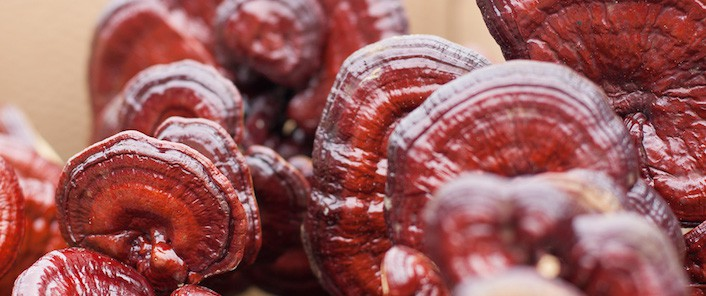 74% of Reishi Products are not Authentic - Real Mushrooms