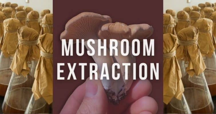 Dual Extraction - Mushrooms