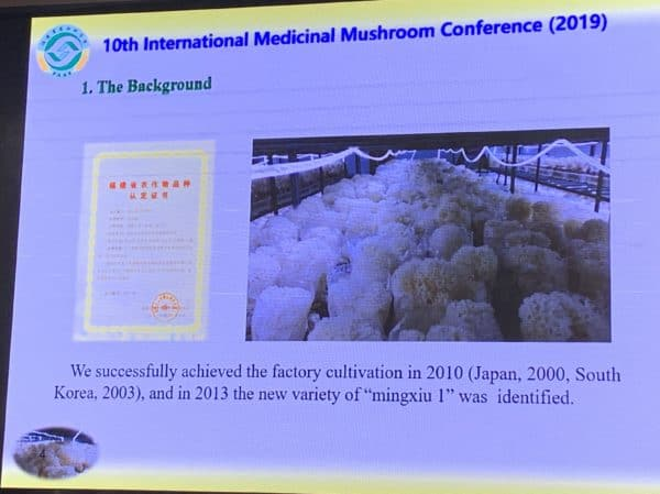IMMC10 - Cauliflower Mushroom Cultivation