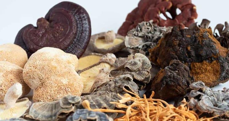 Medicinal Mushrooms for Health - Cordyceps, Lions mane, Reishi, Shiitake, Maitake, Chaga, Turkey tail