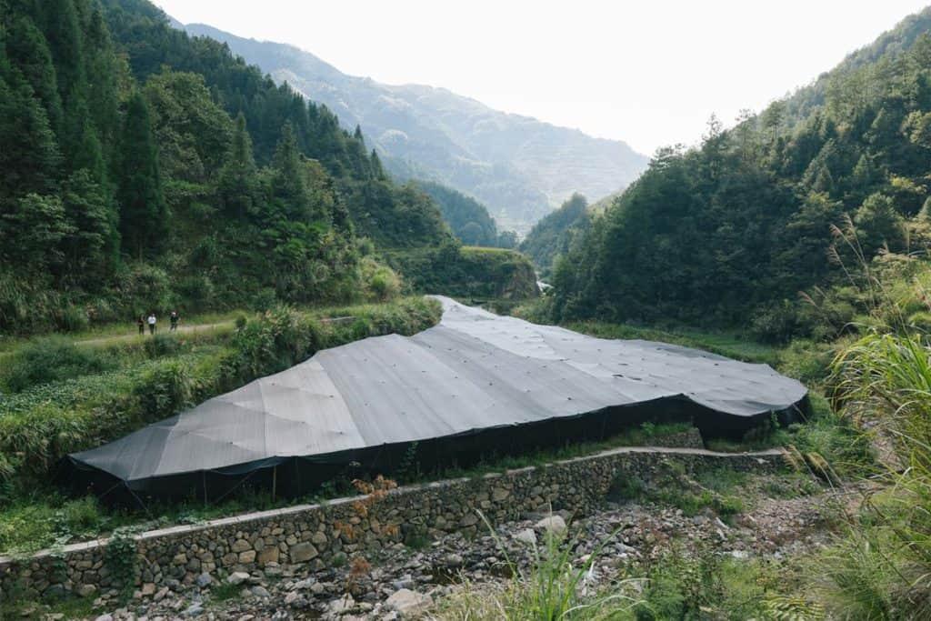 Organic reishi farm in China