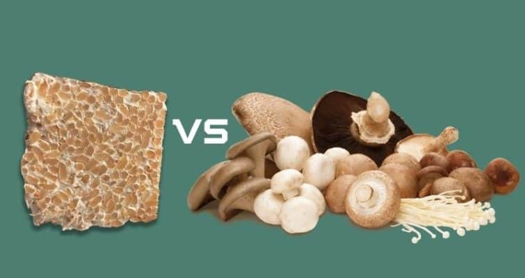 Mycelium vs Fruiting Body