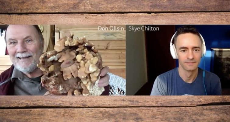 Mushroom-Expert-Don-Ollsin