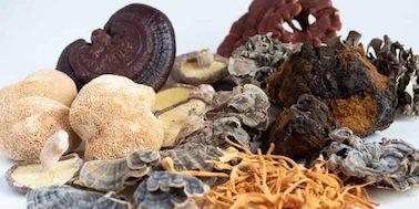 7 medicinal mushroom benefits
