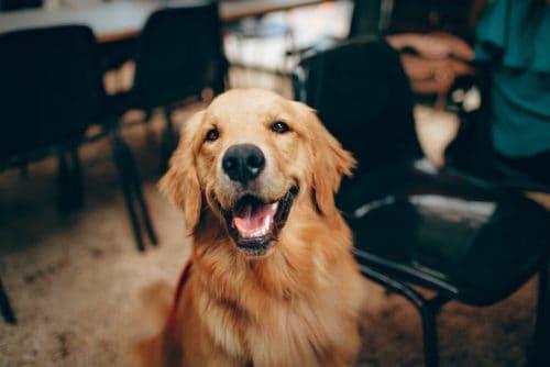 Medicinal Mushrooms for Dogs