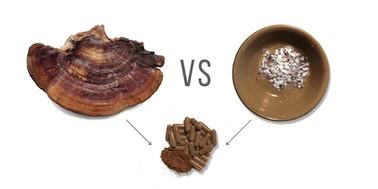 mushroom fruiting body vs mycelium