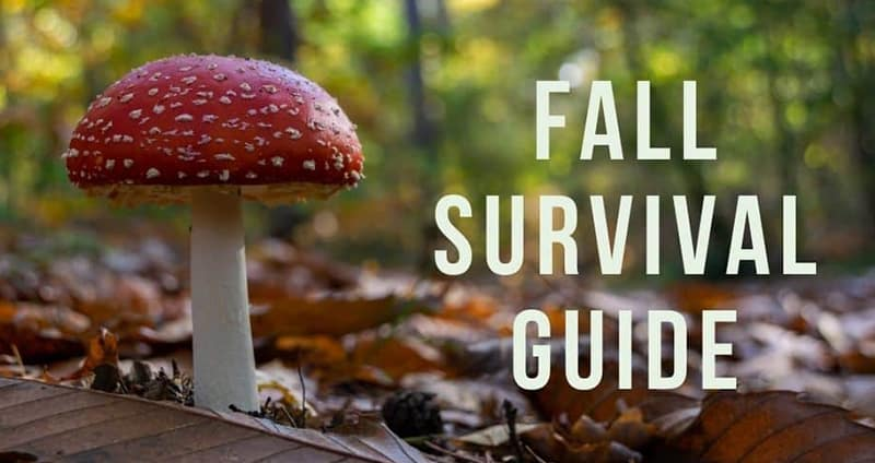 Fall survival guide