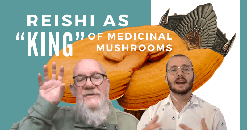Reishi king of mushrooms