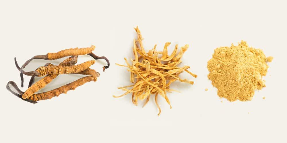 Cordyceps Mushrooms: Supplement Types & Health Benefits
