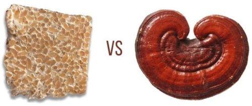 reishi mycelium vs reishi mushroom