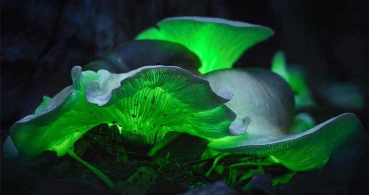 Weird Mushrooms: Profiling 9 of the World's Strangest Fungi