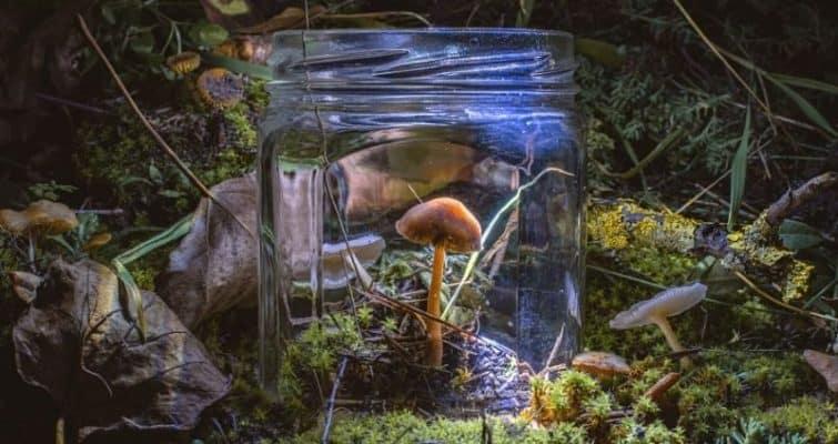 Mycoremediation: 8 Ways that Mushrooms Destroy Pollution